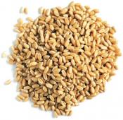 Зерно пшеницы отборное, 1 кг