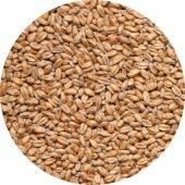 Солод Пшеничный, Курский солод, Россия, 1 кг